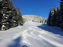 Braunlager Waldschneise