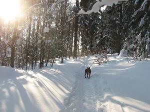 Schneekulisse mit Hund