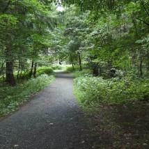 Bezaubernde Waldwege warten auf Sie!